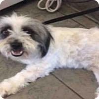 Adopt A Pet :: A427338 - San Antonio, TX