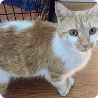 Adopt A Pet :: Lilly-Anne-Adoption Pending! - Colmar, PA