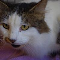 Adopt A Pet :: Princess - Longview, WA