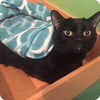 Adopt A Pet :: Django - West Des Moines, IA