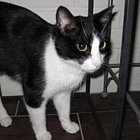 Adopt A Pet :: Oreo 01-17-17 - Bulverde, TX