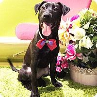 Adopt A Pet :: Queen - Castro Valley, CA