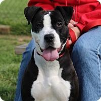 Adopt A Pet :: Charley - Elyria, OH