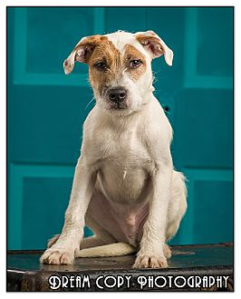 Terrier (Unknown Type, Medium) Mix Puppy for adoption in Owensboro, Kentucky - Spike