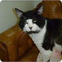Adopt A Pet :: Charles - Hamburg, NY