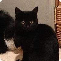 Adopt A Pet :: Mimi - East Hanover, NJ