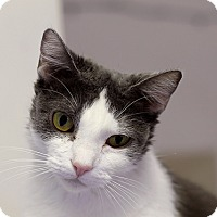 Adopt A Pet :: Vetiver - Chicago, IL