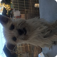 Adopt A Pet :: Alice - Temecula, CA