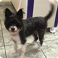 Adopt A Pet :: Nikki - Orlando, FL