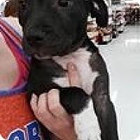 Adopt A Pet :: Linus - Gainesville, FL