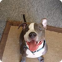 Adopt A Pet :: Spirit - Hawthorne, CA