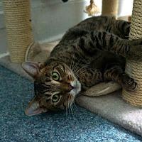 Adopt A Pet :: Hugsy - New York, NY