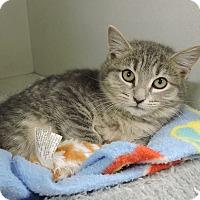 Adopt A Pet :: Marley - Massapequa, NY
