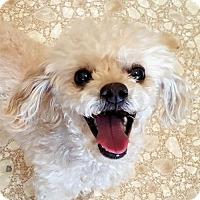 Adopt A Pet :: Milton - Bloomington, IL