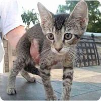Adopt A Pet :: Terri - New Egypt, NJ