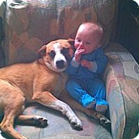 Adopt A Pet :: Coda - Minneapolis, MN