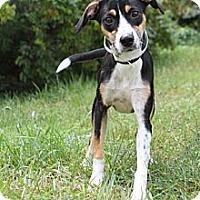 Adopt A Pet :: Natasha - Knoxville, TN
