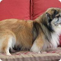 Adopt A Pet :: Theo - Virginia Beach, VA