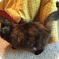 Adopt A Pet :: Willow - Merrifield, VA