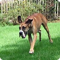 Adopt A Pet :: Bane - St. Louis, MO