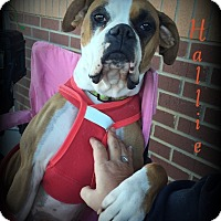 Adopt A Pet :: Hallie - Denver, NC