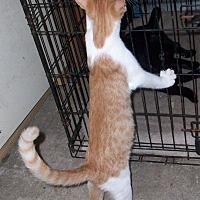 Adopt A Pet :: Blaze - Morriston, FL