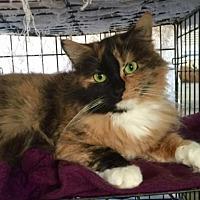 Adopt A Pet :: Barbara - Landenberg, PA