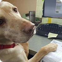 Adopt A Pet :: Clementine - Island Lake, IL