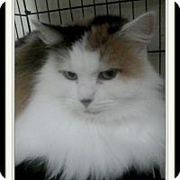 Adopt A Pet :: Fancy - Trevose, PA