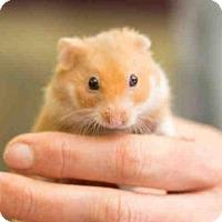 Adopt A Pet :: JAVIER - San Francisco, CA