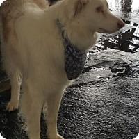 Adopt A Pet :: BUDDY - Gustine, CA