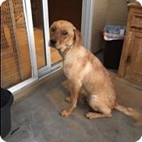 Adopt A Pet :: RAVEN - Glendale, AZ