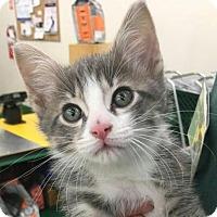Adopt A Pet :: Eric - Columbus, OH