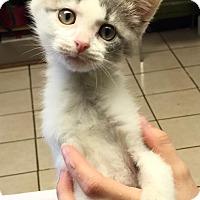 Adopt A Pet :: Murdock - Joplin, MO