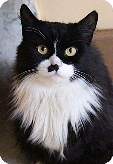 Domestic Longhair Cat for adoption in Medford, Massachusetts - Zeal