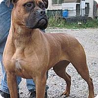 Adopt A Pet :: Josie - Roy, WA