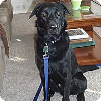 Adopt A Pet :: Carson - Lewisville, IN