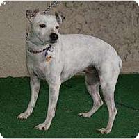 Adopt A Pet :: Pinky - Newcastle, OK