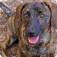 Adopt A Pet :: Marietta the Petite Puppy - Ocala, FL