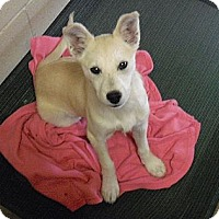 Adopt A Pet :: Allie - Wickenburg, AZ
