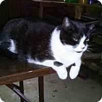 Adopt A Pet :: Zoey - Leamington, ON