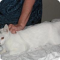 Adopt A Pet :: bo-bo - Pensacola, FL