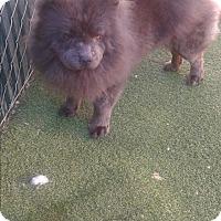 Adopt A Pet :: Sammy - Sacramento, CA