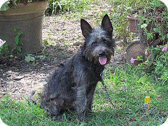 Terrier (Unknown Type, Small) Mix Dog for adoption in Bedminster, New Jersey - BRUCE WAYNE