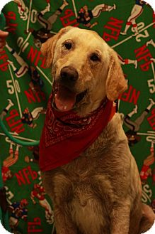 Labrador Retriever Mix Dog for adoption in Twin Falls, Idaho - Troy