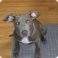 Adopt A Pet :: Lemmy - Eastpointe, MI