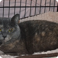 Adopt A Pet :: Violet - Mt. Airy, NC