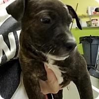Adopt A Pet :: Gomer - Cherry Hill, NJ