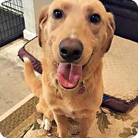 Adopt A Pet :: Roman - McKinney, TX