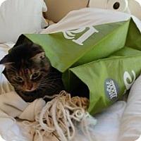 Adopt A Pet :: MeeMee - Alexandria, VA